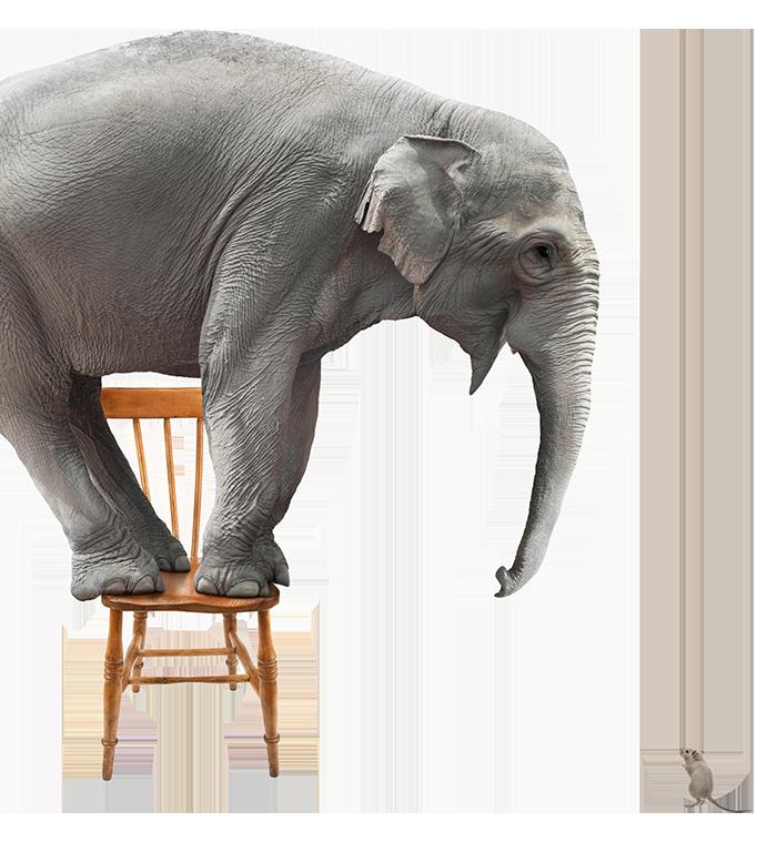 Elephant-Left