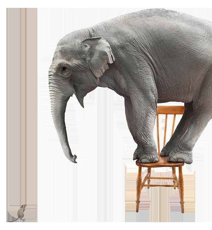 Elephant-Right
